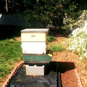 First Hive